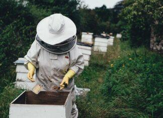 jakie są zastosowania wosku pszczelego
