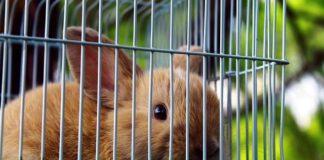 Jaką karmę dla królika wybrać