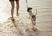 Automatyczne smycze Flexi dla Twojego psa